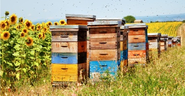 bee-hive-kit